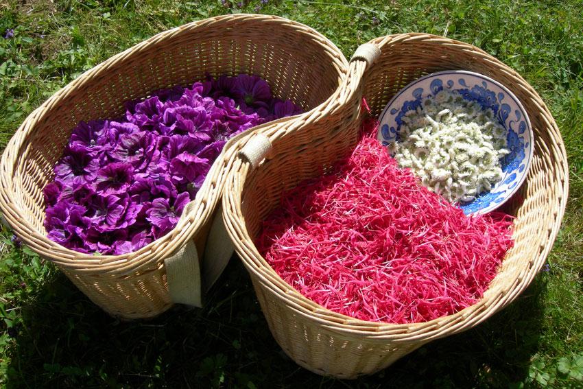 Panier de fleurs fraîchement cueillies