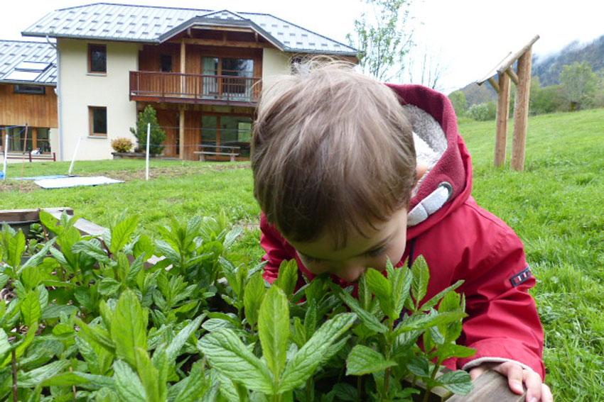 Les jardinières de plantes aromatiques