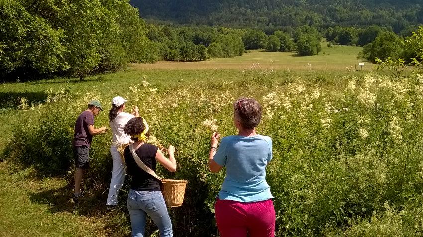 Le rucher école à L'Herbier de la Clappe